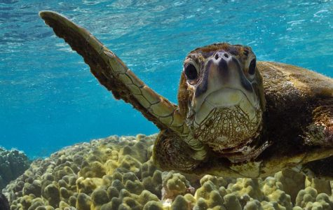 Want to Save the Turtles? It's Beyond Straws